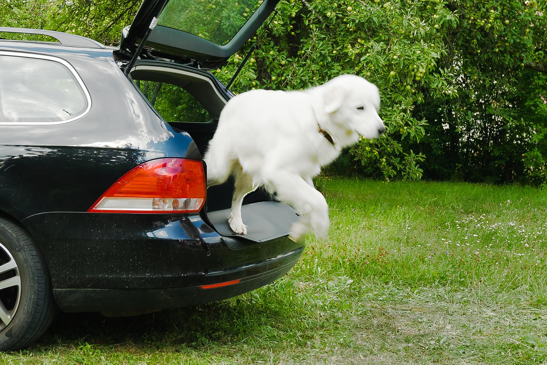 Nicht Ein, Sondern Der Kofferraumschutz! Für Hund, Alltag